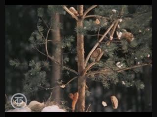 Приключения медвежонка Ниды. Аист на белом снегу