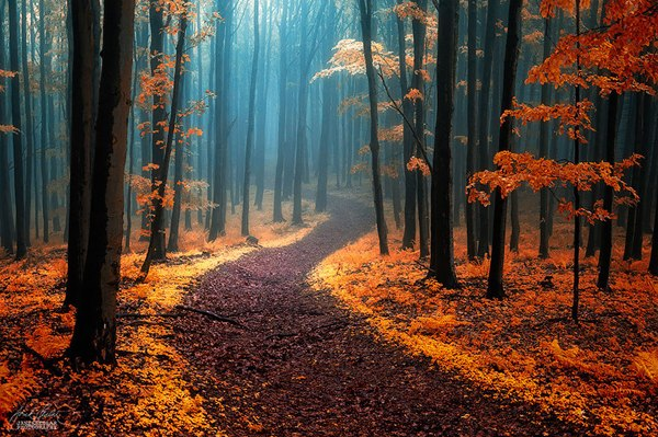 Осень в Белых Карпатах