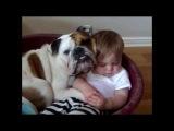 Дружба собак с детьми. Очень смешно!!!