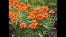 Цветы посадили - награду получили. В Самарском районе завершился конкурс по озеленению