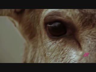 В США суд обязал браконьера раз в месяц смотреть «Бэмби»