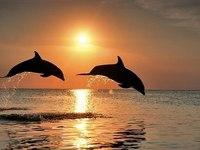 """Предпросмотр схемы вышивки  """"пара дельфинов """". пара дельфинов, предпросмотр."""