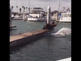Seems like sea lions aren't so tough after all!Video by @afvofficial.mp4