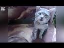 Чихающие коты