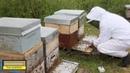 Аппарат для получения пчелиного яда (Китай/Корея)
