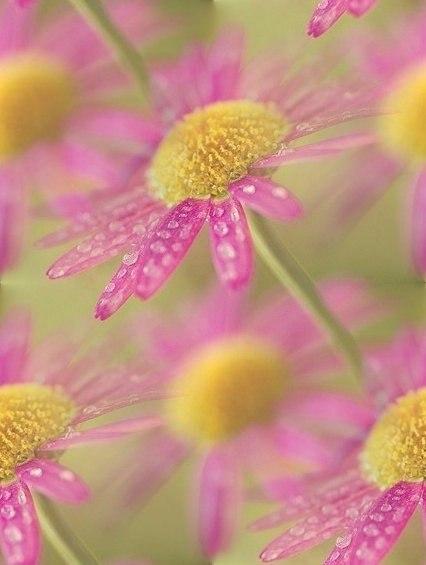 Цветочные и растительные фоны - Страница 2 VWTv9O8p33w
