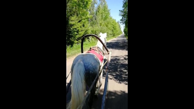 Серая лошадь Благовещенское - Водопад