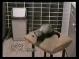 Ну очень смешное видео! Так вы давно не смеялись!