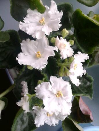 Цветы у Ликки VwqF0n100Gg