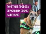 Проводы на пенсию служебных собак в Эквадоре