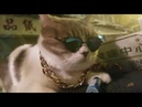 Q BEWARE! Big Boss Cat is coming!