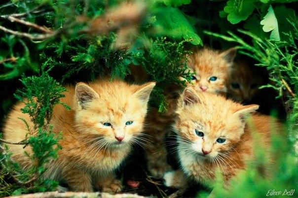 Фото клевых котят 16 фотография