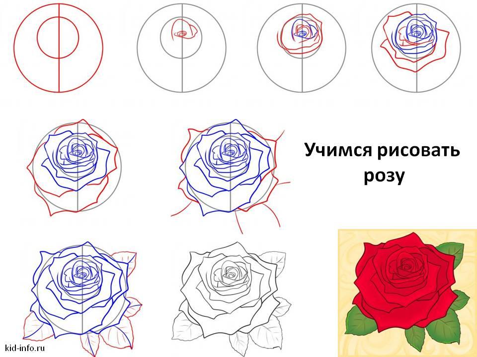 Рисовать розу своими руками 541