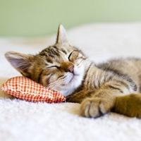 Медитация «Настрой на хороший и глубокий сон»