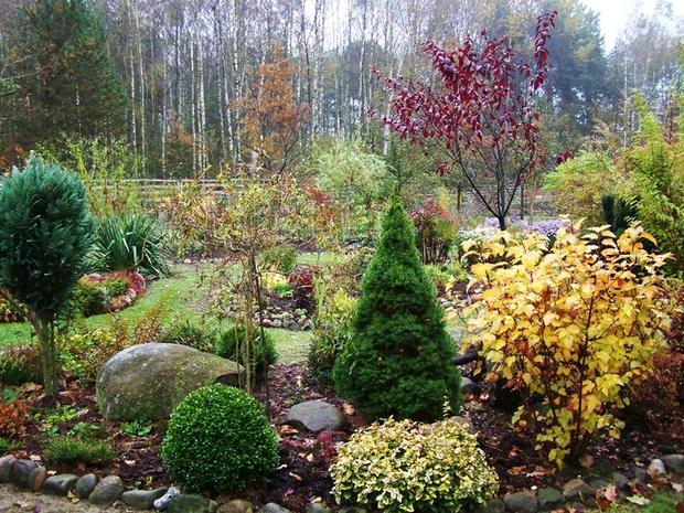 Осенний сад на даче-хвойные