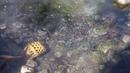 Pai Hot Springs, Mae hong son, Thailand - Free Video Footages