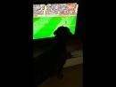 Элвис заядлый фанат футбола