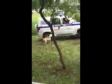 Застрелили собаку