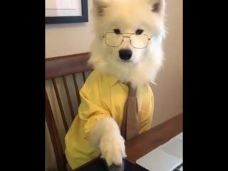 Лохматые офисные работяги