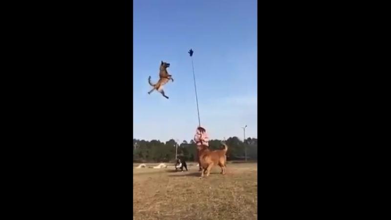 Un Super saut.