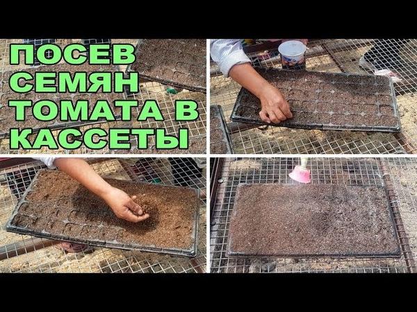 Посев семян томата в кассеты. Начало летне-осеннего сезона в теплице (второй оборот, 21-06-2018)