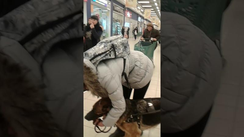 Магазин Лента инвалида по зрению не пропускают с собакой повадырём,город Волгоград