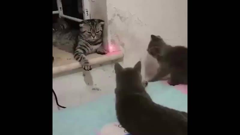 Третий кот ржет как даун