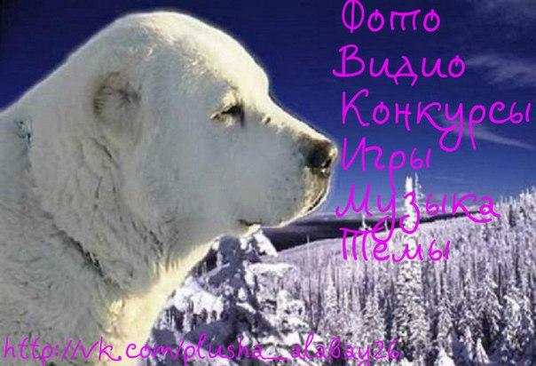 Москвы, является территориальным органом департаментасреднеазиатская овчарка.  Мототрэр гибдд мчс россии по районам.