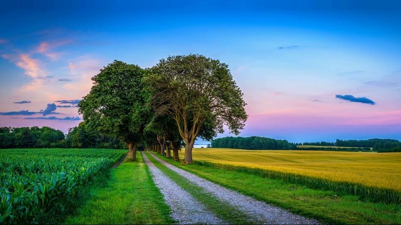Картинка природа. Поле закат, природа, пейзаж, колосья, деревья, дорога, кукуруза, небо.