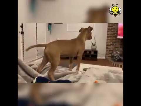 Cachorro chorando com a morte de Mufasa ( Puppy Reacts to Death of Mufasa )