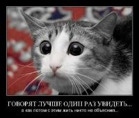Люба Черноусова, 20 октября 1996, Черемушки, id143957361