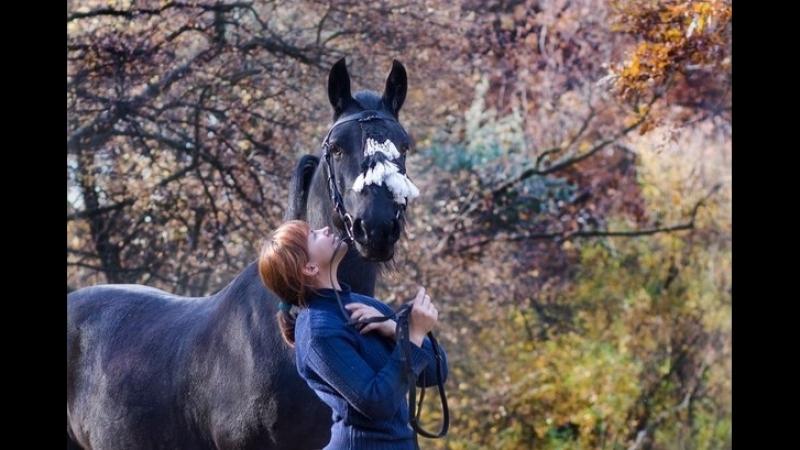 В ритме жизни Выпуск № 29 от 17 07 2017 Конный спорт КСК Камелот