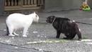 Кошачьи бои Кошки vs собаки Кошки злятся fanimals