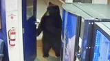 Bear Opens Door to California Police Facility and Walks Around Inside