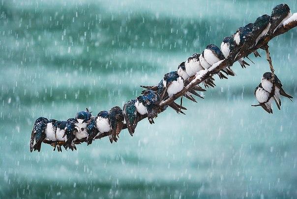 Keith Williams #birds