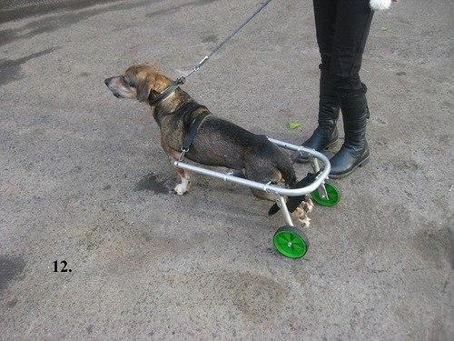 Как сделать инвалидную коляску для собаки