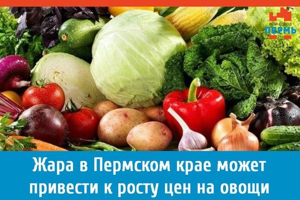 Выращивание овощей оквэд 47