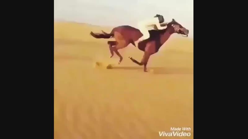 Воины Ислама ( المحاربون ) on Instagram_ _Сообщает.mp4