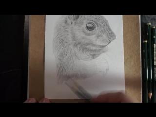 Как нарисовать белку карандашом поэтапно