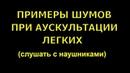 Шумы при аускультации легких в наушниках © Auscultation of the lungs, мain and side noise