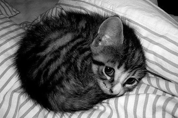 Кіт маленький