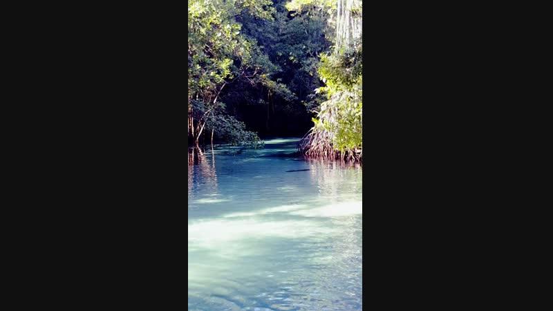 Голубая река на полуострове Самана. Если верить доминиканцам, искупавшись в этой реке помолодеешь на 5 лет!)