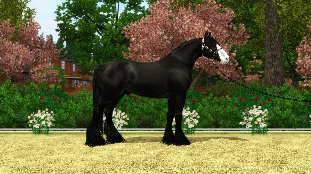 Регистрация лошадей в RHF 1.2 - Страница 9 JGWbZFIar64