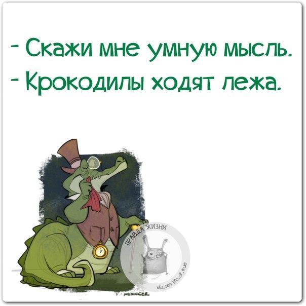 http://cs543105.vk.me/v543105123/11726/S2lSKiibMng.jpg