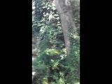 по Старому парку Кабардинки VID_20180919_104447