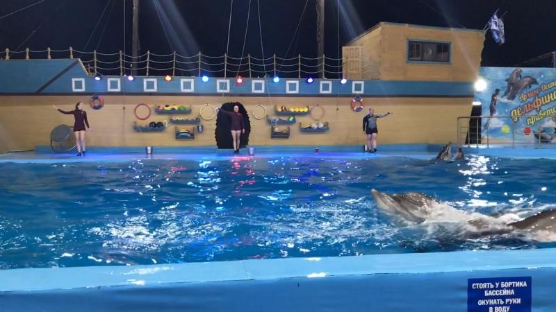 Архипо - Осиповка, дельфинарий