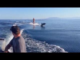 Вейкборд с дельфинами