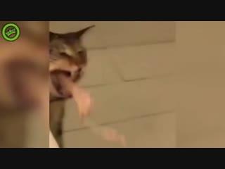 кот блюёт