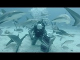 GoPro: Shark Feeding with Andy Casagrande in 2.7K 3D