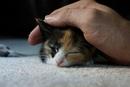 А мяуканье кошки изобрели специально для людей…